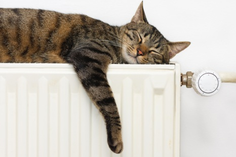 Happy cat lying on a radiator.